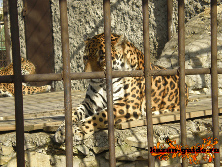 казанский зоопарк фото, казань зоопарк, зоопарк в казани