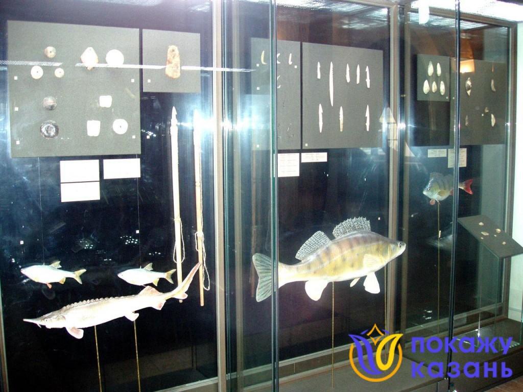 Размеры рыбы поражают