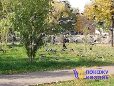 Голуби нехотя взлетают, делают всей стаей небольшой круг и снова садятся на газон, отдохнуть от трудов праведных.