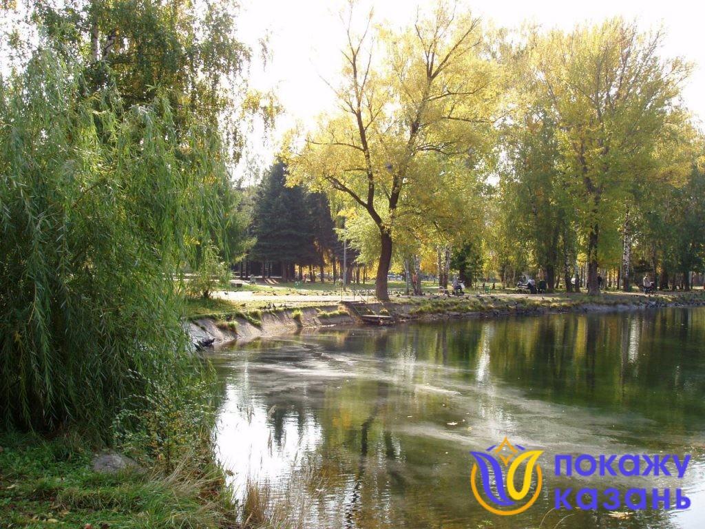 В воде плавают опавшие листья.
