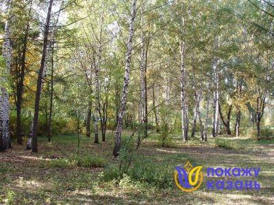 Посадки возле северной аллеи больше напоминают лес или рощу.
